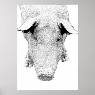 Das Schwein in Schwarzweiss Poster