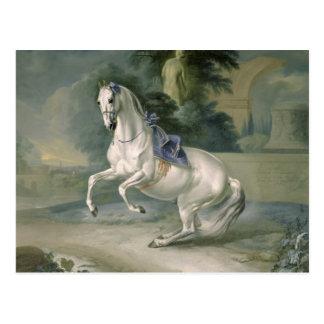 """Das weiße """"Leal"""" levade en des Stallion, 1721 Postkarte"""