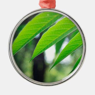 Defocused und unscharfer Niederlassung Ailanthus Silbernes Ornament