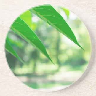 Defocused und unscharfer Niederlassung Ailanthus Untersetzer