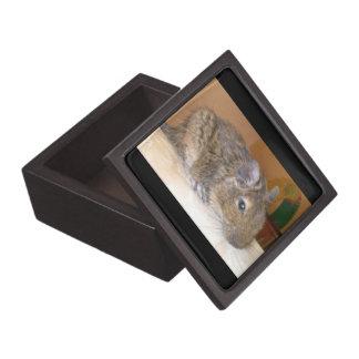 Degu entspannende erstklassige Geschenkboxen Schachtel