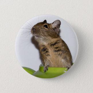 Degu in der grünen Fotografie Runder Button 5,7 Cm