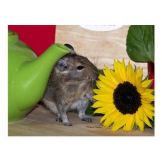 Degu mit Teekanne u. Sonnenblume Postkarte