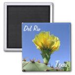 Del Rio Texas gelbe Kaktusblume Andenken