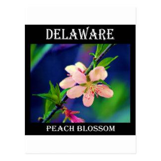 Delaware-Pfirsich-Blüten Postkarte