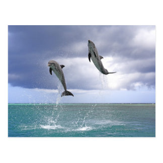 Delfin, Dauphin, groberes Tuemmler, Tursiops 2 Postkarte