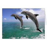 Delfin, Dauphin, groberes Tuemmler, Tursiops 4 Grußkarte