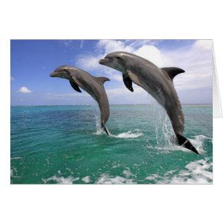 Delfin, Dauphin, groberes Tuemmler, Tursiops 4 Karte