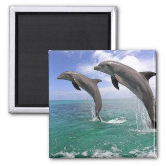 Delfin Magnets
