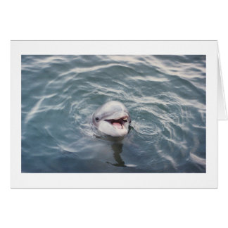 Delphin des atlantischen Bottlenose Karte