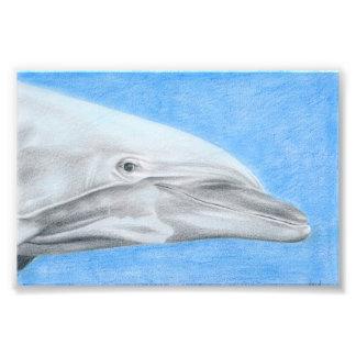 Delphin - Farbstiftzeichnung Fotodruck