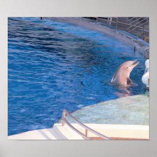 Delphin-Foto Poster