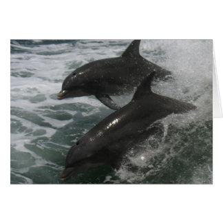Delphin-Freundschaft/Liebe-Anmerkung Karte