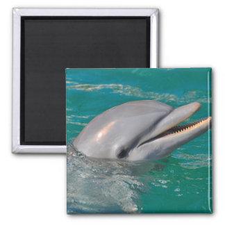 Delphin-nahes hohes quadratischer magnet