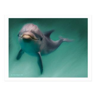 Delphin Postkarte