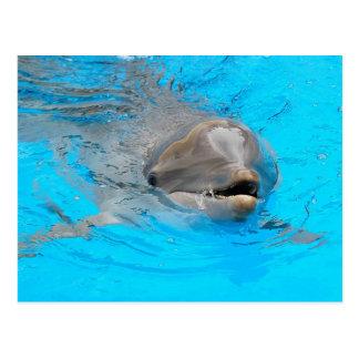 Delphin-Postkarte