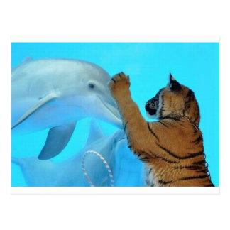 Delphin- und Tigertreffen Postkarte