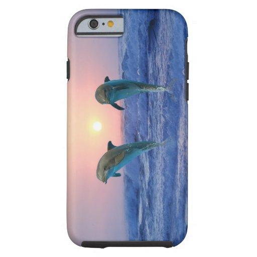 Delphine am Sonnenaufgang Tough iPhone 6 Hülle