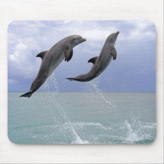 Delphine | Delfin (groberes Tuemmler) Mousepad