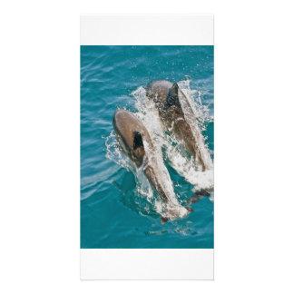 Delphine, die frei im Pazifischen Ozean schwimmen Bilderkarten