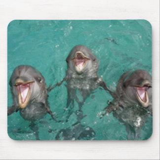 Delphine im blauen Wasser des Türkises Mousepad