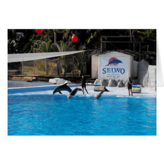 Delphine und ihre Trainer in Spanien Karte