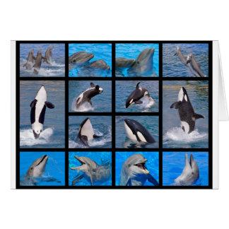 Delphine und Killerwale Karte