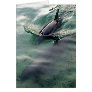 Delphine von Hawaii Karte