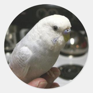 Demure All-Weißer Parakeet mit Elektroherd Runder Aufkleber