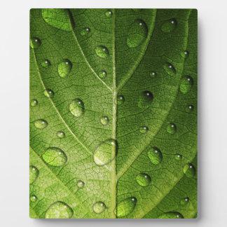 Denke ökologisch - Tröpfchen auf Blatt Fotoplatte