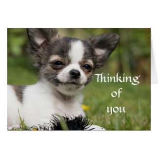 Denken an Sie Chihuahua Grußkarte