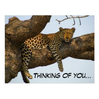 Denken an Sie (Leopard in einem Baum) Postkarte