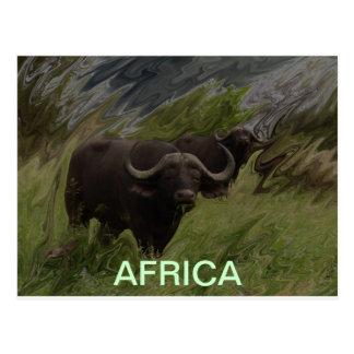Der afrikanische Büffel Postkarte