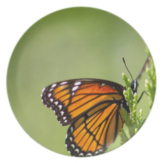 Der ausgezeichnete Monarchfalter Teller