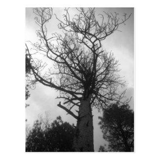 Der Baum Postkarte