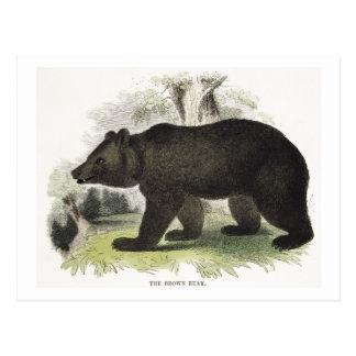 Der Braunbär, pädagogische Illustrations-Kneipe. Postkarte