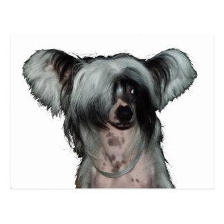 Der chinesische Hund mit Haube Postkarte
