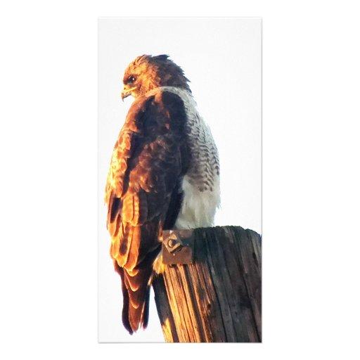 Der Falke-Foto-Karte des einzigartigen Fassbinders Bilderkarte