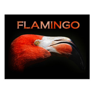 Der Flamingo - Hauptdetail Postkarte