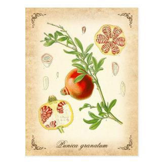 Der Granatapfel - Vintage Illustration Postkarte