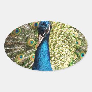 Der hübsche Pfau Ovaler Aufkleber
