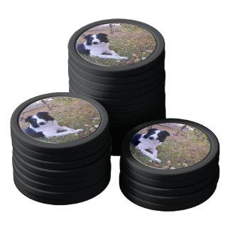 Der Hund, der themenorientiert ist, Border-Collie Poker Chip Set
