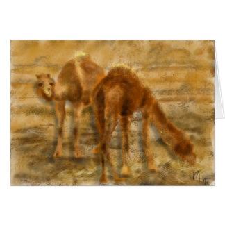 Der Iran-Kamele