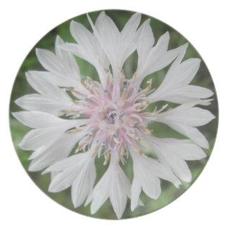Der Knopf des Platten-- weißen/rosa Junggesellen Flache Teller