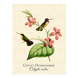 Der Kolibri-Vintage Kunst des Costas Postkarte