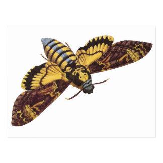 Der Kopf-Falke-Motte des Todes Postkarte