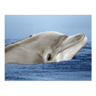 Der lächelnde Delphin Postkarte