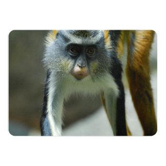 Der niedliche Affe Guenon Wolfs Einladungskarten