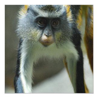 Der niedliche Affe Guenon Wolfs Personalisierte Ankündigungskarte
