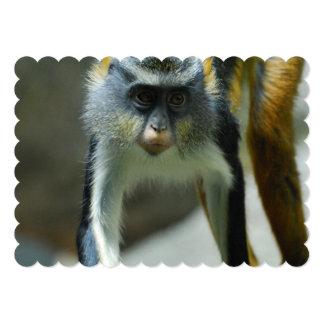 Der niedliche Affe Guenon Wolfs Personalisierte Ankündigung